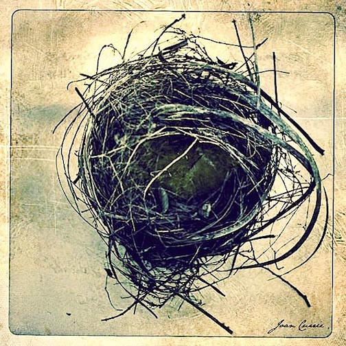 Spring Nest by Joan Currie